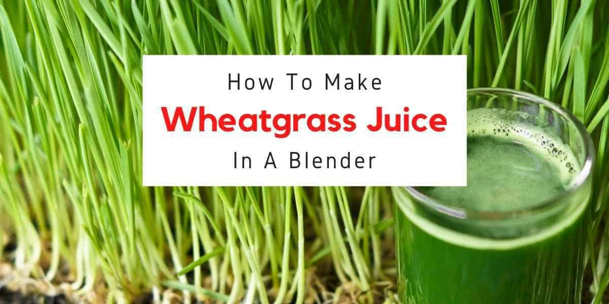 text reading how to make wheatgrass juice in blender